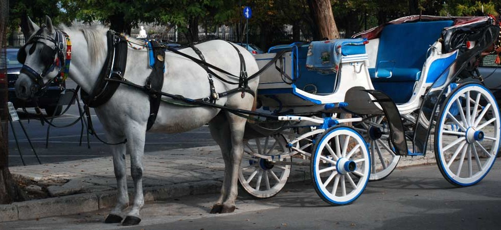 Horse drawn carriage rides are available in Corfu Town & Sidari also we can use one for a fantastic wedding!!!